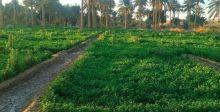 توجه نيابي لتمرير قانون إيجار الأراضي الزراعية