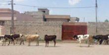 تربية الحيوانات  داخل المدن