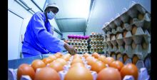 وزير الزراعة يطالب بالحفاظ على أسعار البيض