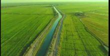 تهيئة 500 ألف دونم كفرص استثمار  زراعي في النجف