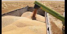 توسيع البرنامج الوطني لتنمية زراعة  الحنطة في كركوك