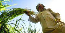 وزارة الزراعة تستعد لتطبيق الخطة  الشتويَّة