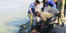 الطب العدلي بمدينة الموصل: أغلب الجثث التي نتسلمها هي لحالات الانتحار والنزاعات العشائرية