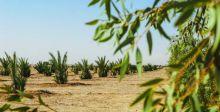 تحذيرات نيابية من انقراض أنواع النخيل النادرة في العراق