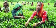 مهرجانات الزراعة في فولوكلور بنغلادِش