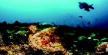 متحف تحت الماء يتيح للزائرين  {الغوص في التاريخ}