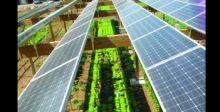 مطعم يعمل بالطاقة الشمسيَّة ومراعٍ للبيئة في فرنسا