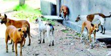 أهالي حي البساتين يعانون من الكلاب السائبة