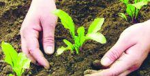 الزراعة العضويَّة «أمام مفترق طرق» في مؤتمرها العالمي