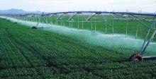 الجبوري: خطة زراعيَّة شتويَّة لتحقيق الأمن الغذائي