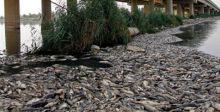 نفوقُ الأسماكِ يدقُّ ناقوسَ خطرِ تلوثِ البيئة
